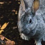 動物病院の法人化~申告期限に間に合わなかった時の対処法